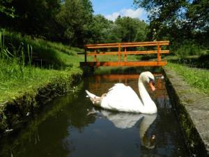 """Der """"Bewacher des Teichs"""""""