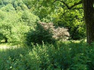 Natur Pur Brunnental