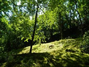 Brunnethal, Schafwiese