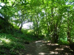 Wanderweg, Brunnental